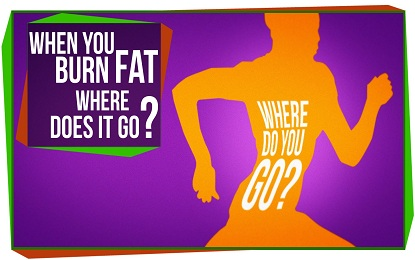 This Is Where Your Fat Actually Goes When You Lose Weight