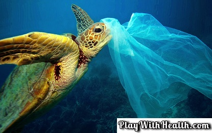 Why do Sea creatures Eat Plastic?